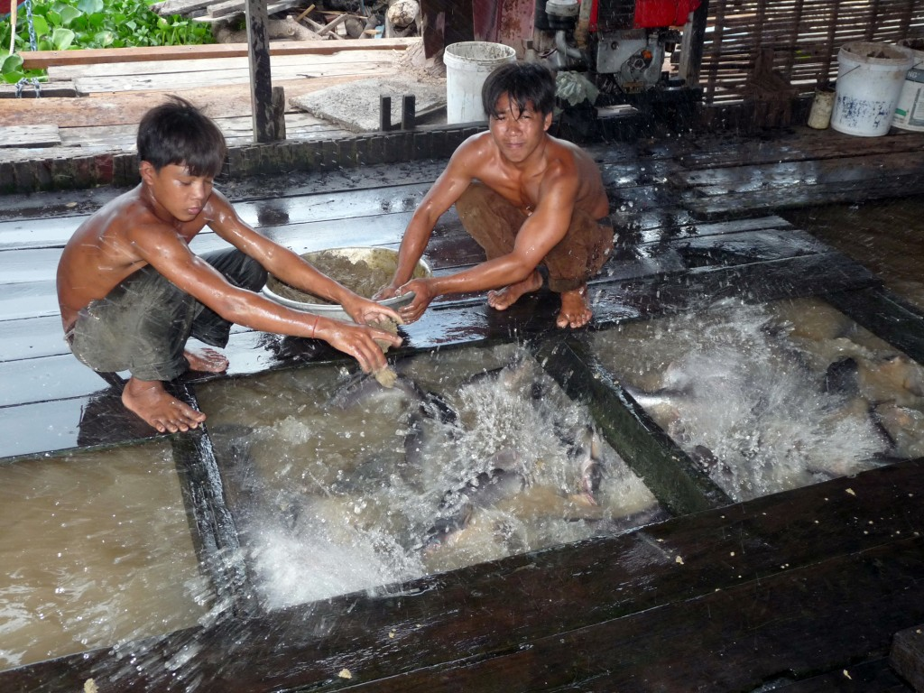 Fish farming and aquaculture | Open Development Cambodia (ODC)
