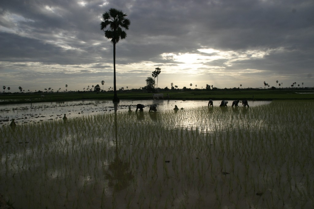 Rice Farmer in Cambodia. Photograph by ILO in Asia and the Pacific. Licensed under Creative Commons Attribution-NonCommercial-NoDerivs 2.0.