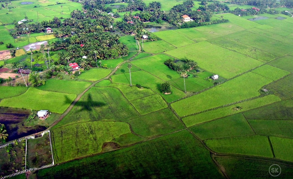 Aerial view of Cambodia paddy rice field. Photo by Sai Kwong.