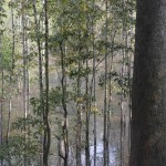 Flooded forest in Cambodia. Photo by Andrea Kirkby, taken on 11 May 2014. Licensed under Creative Commons Attribution-NonCommercial 2.0 Generic.
