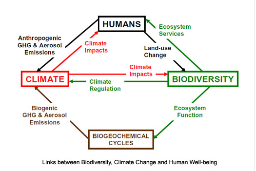 """Biodiversity and human well-being"". Global Greenhouse Warming."